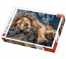 Puzzle 1000 elementów Śpiący lew