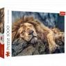 Puzzle 1000: Śpiący lew (10447)