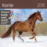 Kalendarz wieloplanszowy Konie 30x30 2019