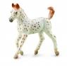 Koń rasy knabstrupper foal (88848)