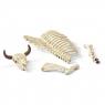 Kości (42249)