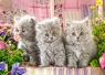 Puzzle 260: Three Grey Kittens
