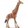 Samiec żyrafy - 14749