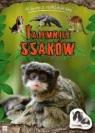 Tajemnice ssaków Album z naklejkami  Bator Agnieszka