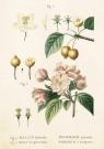 Karnet ST249 B6 + koperta Kwiaty jabłoni