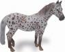 Klacz British Spotted Pony maści kasztan Leopard XL