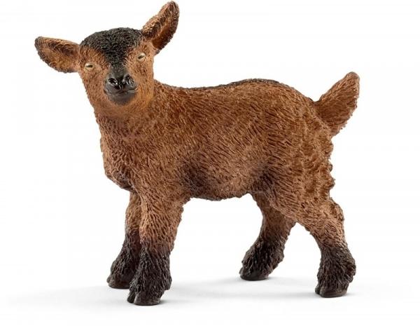 Młoda koza - 13829