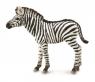 Zebra źrebię (88850)