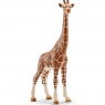 Samica żyrafy - 14750