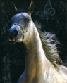 Notes Konie