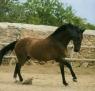 Kalendarz 2013 Koń trójdzielny