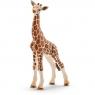 Młoda żyrafa - Schleich (14751)