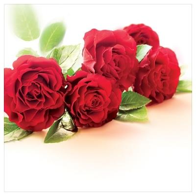 Karnet kwiatowy FF78