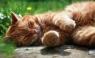 Kalendarz 2016 Trójdzielny Płaski KTT kot
