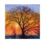 Karnet kwadrat z kopertą The Big Tree
