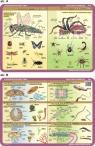 Podkładka edukacyjna. Owady, pajęczaki, pierwotniaki, płaziń