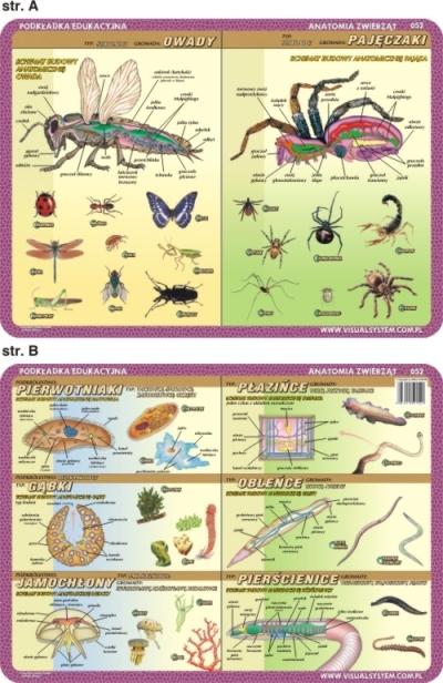 Podkładka edukacyjna. Owady, pajęczaki, pierwotniaki, płaziń Inne