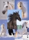 Zeszyt A5 Top-2000 w kratkę 60 kartek Winter Horses mix