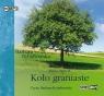 Koło graniaste  (Audiobook) Rybałtowska Barbara