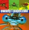 Owady i pajęczaki Grabowski Michał, Jaskuła Radomir, Pabis Krzysztof