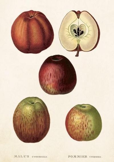 Karnet ST253 B6 + koperta Jabłko