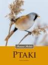 Ptaki Fauna Polski Zawadzka Dorota