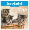 Kalendarz 2019 13 Planszowy Kociaki EV-CORP