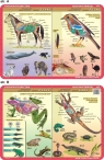 Podkładka edukacyjna. Płazy, gady, ssaki, ptaki