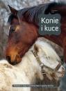 Konie i kuce Christiane Gohl