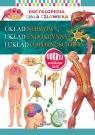 Encyklopedia ciała człowieka. Układ nerwowy, układ endokrynny i układ