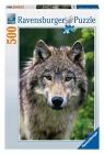 Puzzle Ravensburger 500 zwierzęta Wilk (143542)