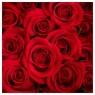 Karnet kwiatowy FF12
