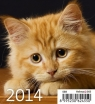 Kalendarz 2014 Kociaki Mini Helma .