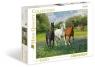 Puzzle Horses 1000 (39255)