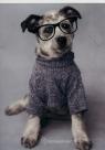 Zeszyt A5 Rachael Hale w trzy linie 16 kartek Pies w okularach (RHO-105)