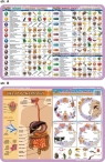 Podkładka edukacyjna. Szkielet, mięśnie, mózg i zmysły człow