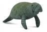 Słoń morski (88455)