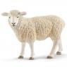 Owca (13882)