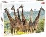 Puzzle 1000: Żyrafy