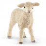 Mała owieczka (13883)
