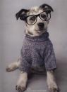 Teczka z gumką A4  Rachael Hale Pies w okularach (RHO-109)