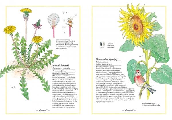 Ilustrowany inwentarz kwiatów Aladjidi Virginie