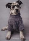 Zeszyt A5 Rachael Hale w kratkę 16 kartek Pies w okularach (RHO205)