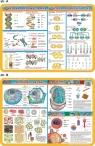 Podkładka edukacyjna. Komórki i tkanki, bakterie i wirusy, D