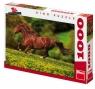 Puzzle 1000 Koń na łące DINO