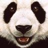 Karnet kwadrat z kopertą Panda