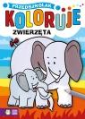 Przedszkolak koloruje. Zwierzęta