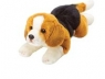 Beagle 35 cm leżący (12058)