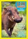 Dzikie Zwierzęta 23 - Guziec