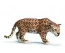 Jaguar (14359)